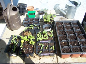 seed sprouts 001